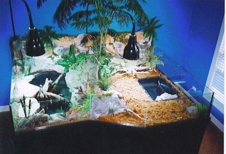 Oltre 1000 idee su Tartarughiere su Pinterest | Tartaruga Habitat ... 10 Gallon Dart Frog Vivarium
