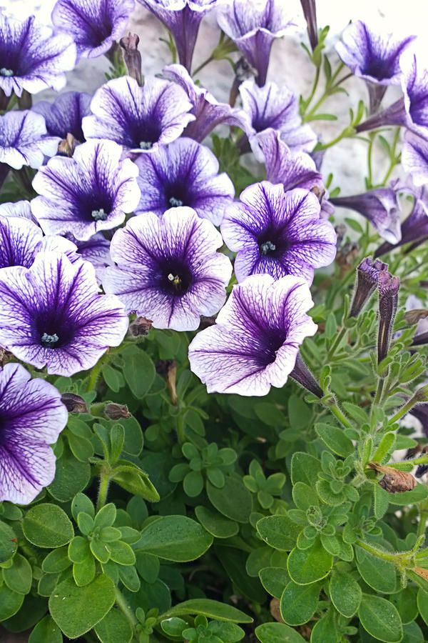 8 Plants That Repel Bugs and Mosquitoes -- Grow these in your garden or plant them ina potto keep the bugs away.