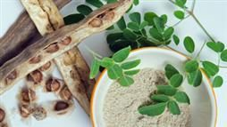 Moringa is a superfood for both its nutritional and healing properties.   Loaded with nutrients and antioxidants, and in humans has been shown to help lower blood pressure, reduce inflammation and maintain healthy cholesterol levels. Has antiviral and anticancer properties and may help regulate thyroid function. Safe for dogs, cats, birds and small mammals; same health benefits for pets as it does for people