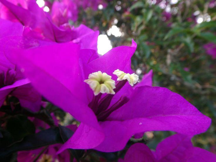 Flor morada crece a borde de carretera. ¿Necesitas fotos como esta para el contenido de tu web? Visita: www.laweb.com.co/contenido-web/