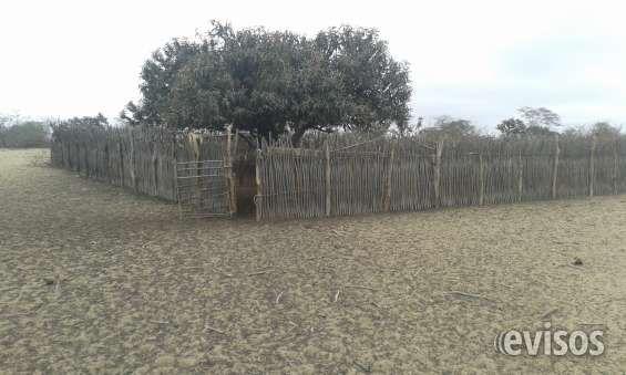 Venta de Terreno Eriazo Vendo de Ocasión Terreno Eriazo de 1000 Has. Tit .. http://catacaos.evisos.com.pe/venta-de-terreno-eriazo-id-607196