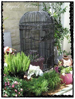 love this old cage as a center piece in the garden