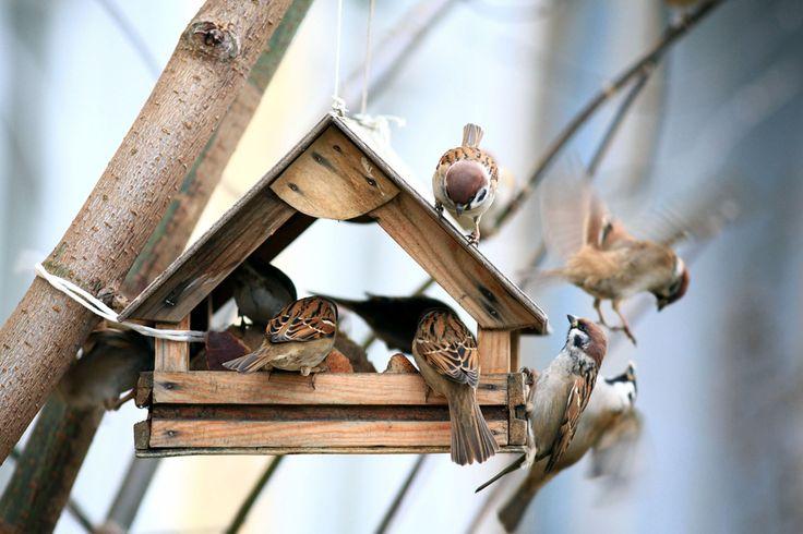 Outdoor Living: Taking Care of Wild Birds Through Winter
