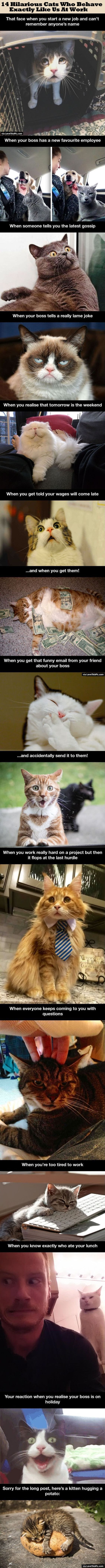 14 Hilarious Cats Who Behave Exactly Like Us At Work cute animals cat cats adorable animal kittens pets kitten funny pictures funny animals funny cats: