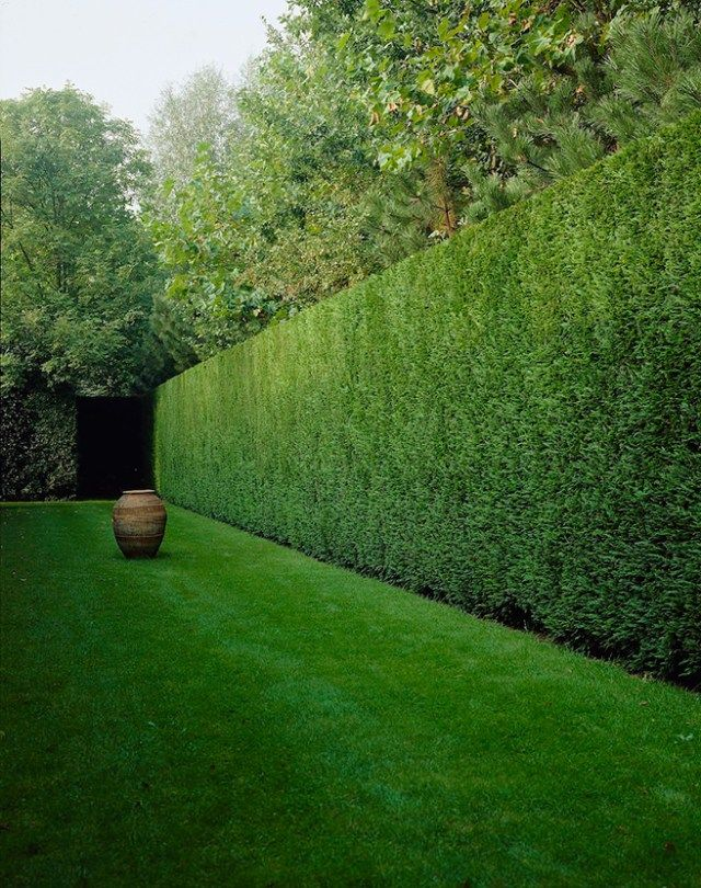 Once you've planted your new hedge, your work has only just started! Here's the low-down on helping your Leylandii trees to grow and thrive.