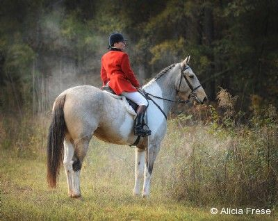 First Whip by Alicia Frese via 2015 Equine Ideal Online Photography Contest