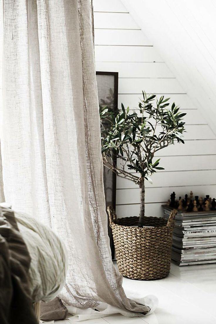 Olijfboom in je huiskamer