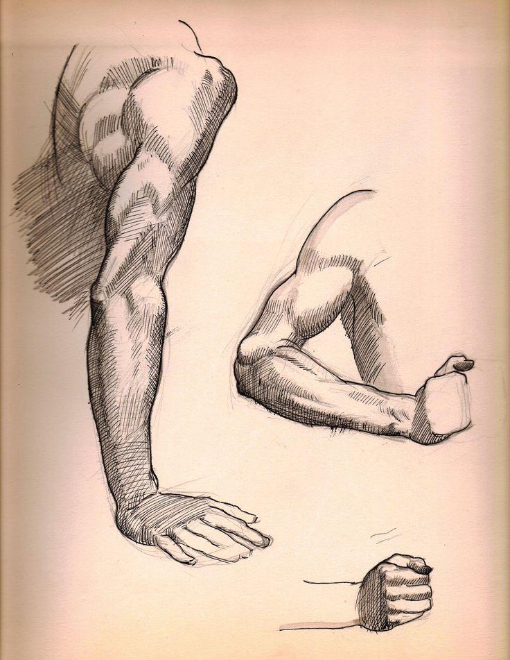 Anatomy sketches by Harry E. Stinson