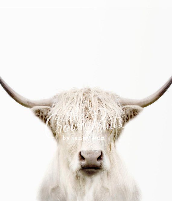 Highland cow print PRINTABLE art Cow art Trendy wall art ...