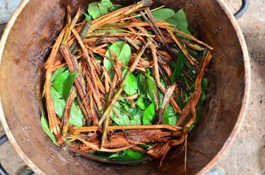 ayahuasca 101 what is ayahuasca ayawaska iowaska tea