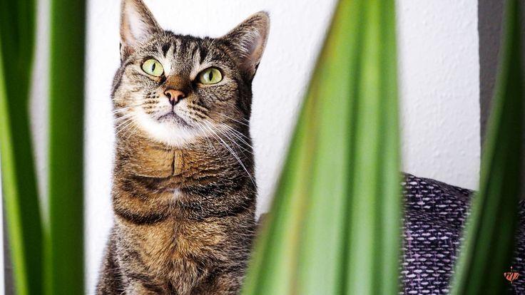 Auflistung von ungiftigen Pflanzen für Katzen