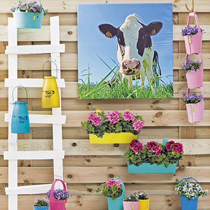 178 best intratuin tuin en terras images on pinterest for Schutting intratuin