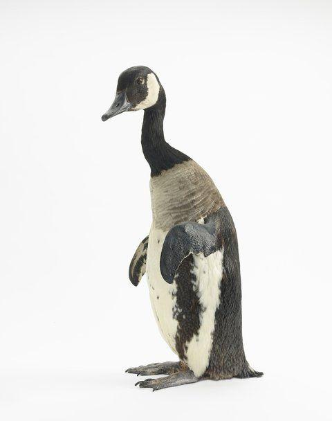 Thomas Grünfeld Misfit (Canadian goose/penguin) 2014 Taxidermie