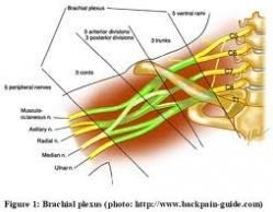 """¿SABÍAS QUE...?  La sensación que dá cuando una parte de nuestro cuerpo """"se duerme"""" es llamada neurapraxia. Usualmente ocurre cuando un nervio es comprimido entre un hueso y otro objeto duro. La sangre continua circulando por el área afectada."""