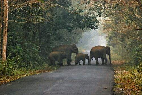Protest Halts Tree Chopping in Dooars   The forest department has halted the task of chopping down trees in the fringes of Gorumara National Park for facilitating the construction of a 2km long road over-bridge on NH31 because of opposition from wildlife enthusiasts.  The over-bridge will be built at the railway level-crossing at Bichabhanga close to Lataguri and 20km from Jalpaiguri.  As officials of the West Bengal Forest Development Corporation arrived this morning to cut down trees to…