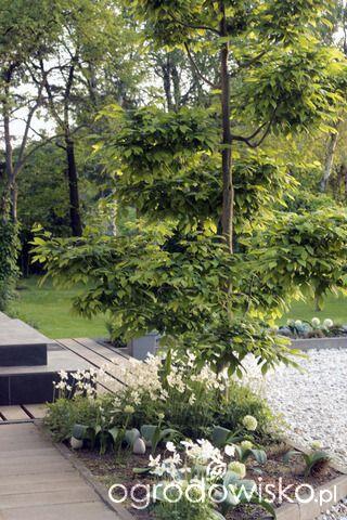 Ogród tworzę nowoczesny czyli wewnętrzna walka jak nie zostać kokoszką :) - strona 1787 - Forum ogrodnicze - Ogrodowisko