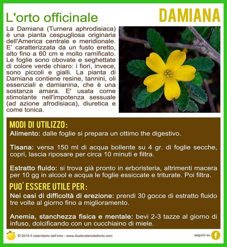 La Damiana