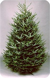 How to Keep a Christmas Tree Fresh--Tips on picking the right tree and keeping it alive through Christmas!
