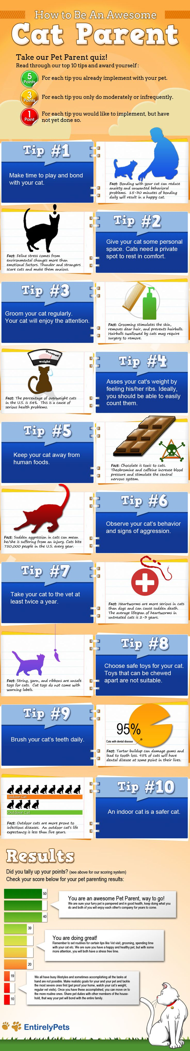 How To Be An Awesome Cat Parent   #infographic #HowTo #CatParent