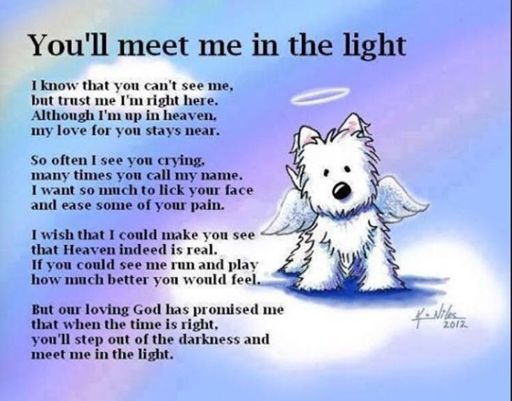Image Result For Missing My Dog Quote Pet Loss Quotes Dog Loss Quotes Death Of A Pet