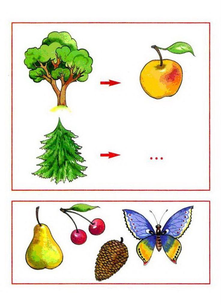 (2015-06) Æble og kogle