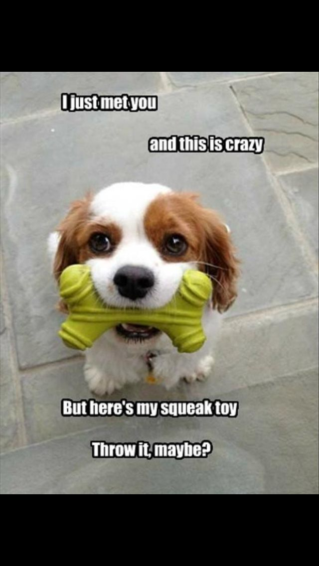 awesome been looking for a squeaky toy just like this for my doberman,does it come in poodle shape as well? or even pug? please please say yes