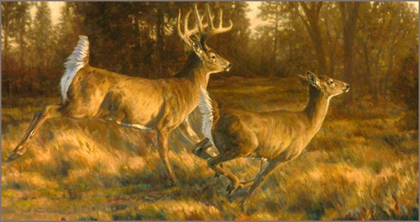 deer lodge big and beautiful singles Top 10 luxury hunting lodges   arctic caribou and other big-game species roaming about the locale for your choosing  fallow deer, and wildebeest.