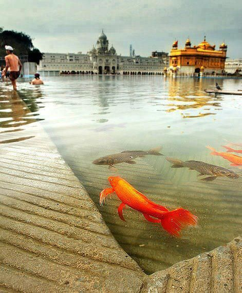 The Golden Temple - Amritsar, Punjab