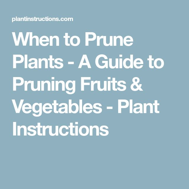 When to Prune Plants - A Guide to Pruning Fruits & Vegetables - Plant Instructions