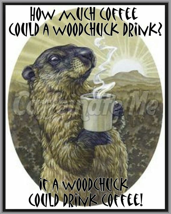 Woodchuck