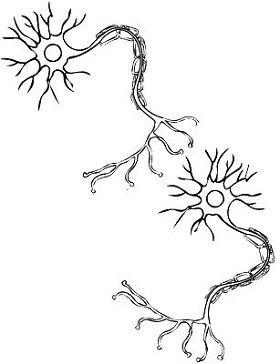 18 best Neuromuscular Junction images on Pinterest