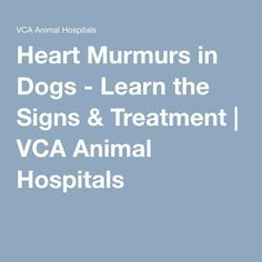 Best Food For Dogs With Heart Murmur