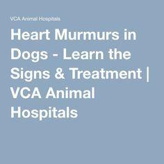 Heart Murmur In Dogs Natural Treatment