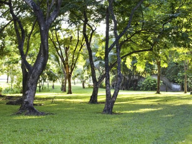 DIY Network gives you expert tips and advice for growing grass under a canopy of trees.