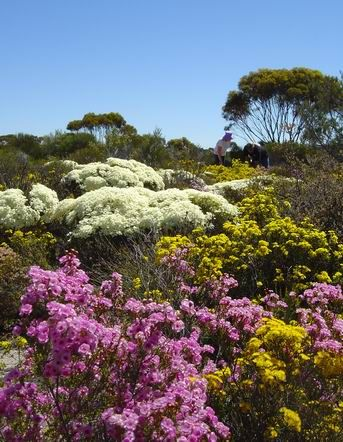 Western Australian Wildflowers - these grow just as well on our Central Coast farm