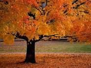 fall - Google Search