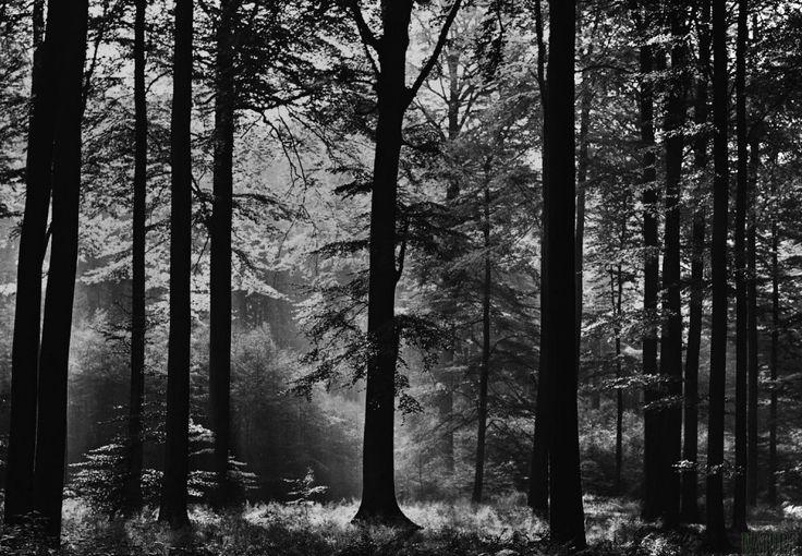 Sfondi con uno splendido scenario boschi meravigliosi