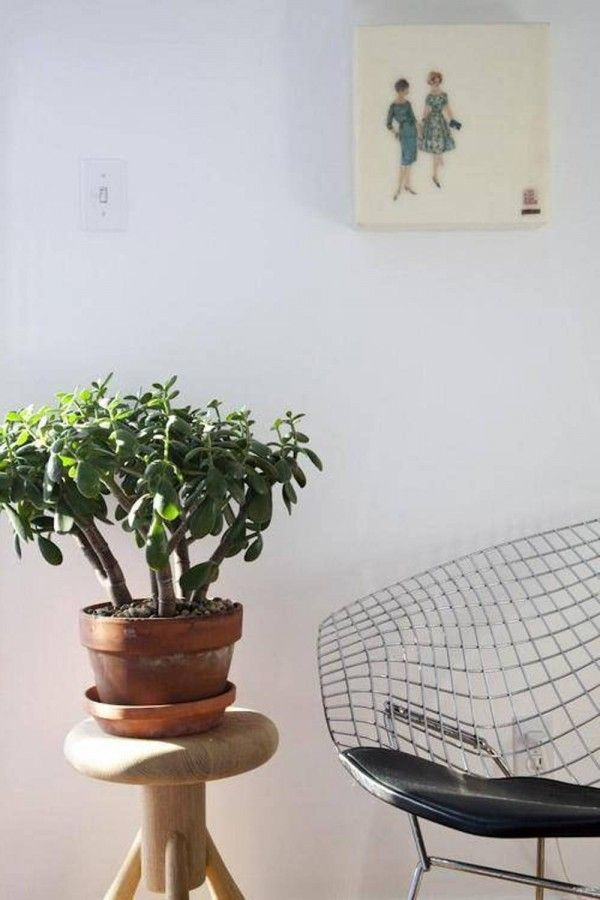 plants feng shui home layout plants. 107 Best Feng Shui Images On Pinterest Plants And Tips Home Layout