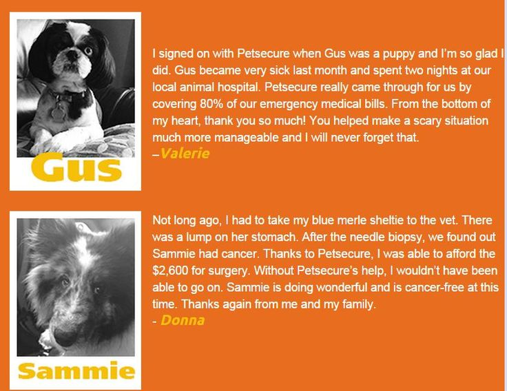 From the Aug. 2014 edition of our eTails newsletter: http://www.petsecure.com/etails/august-2014/#customer