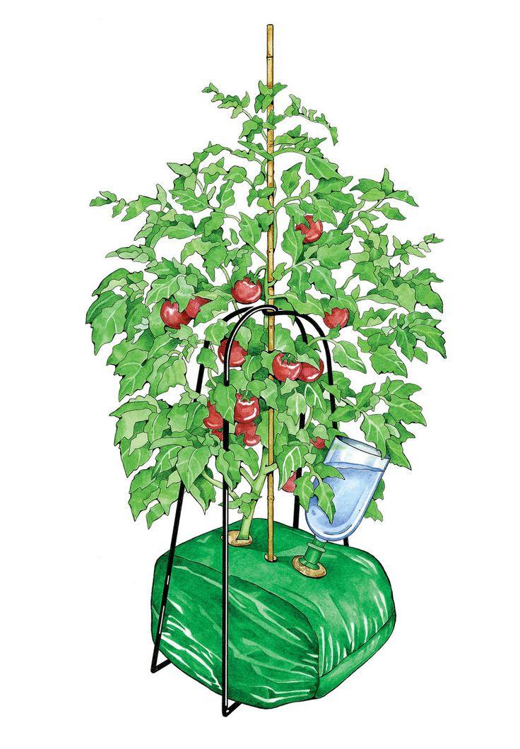 Tomato Cube, Tomate Kit Crescer | Compra de Abastecimento do jardineiro