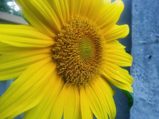 DD on the Blog...: Sonne blomme