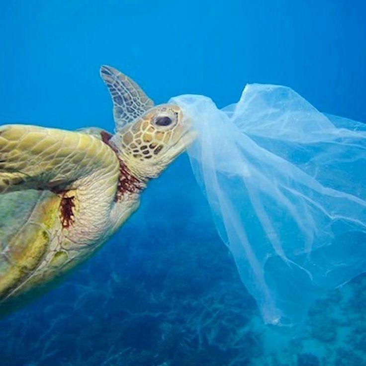 No tires bolsas de plástico al mar las tortugas las confunden con medusas las comen y mueren!   Visita nuestro perfil y aprende más!