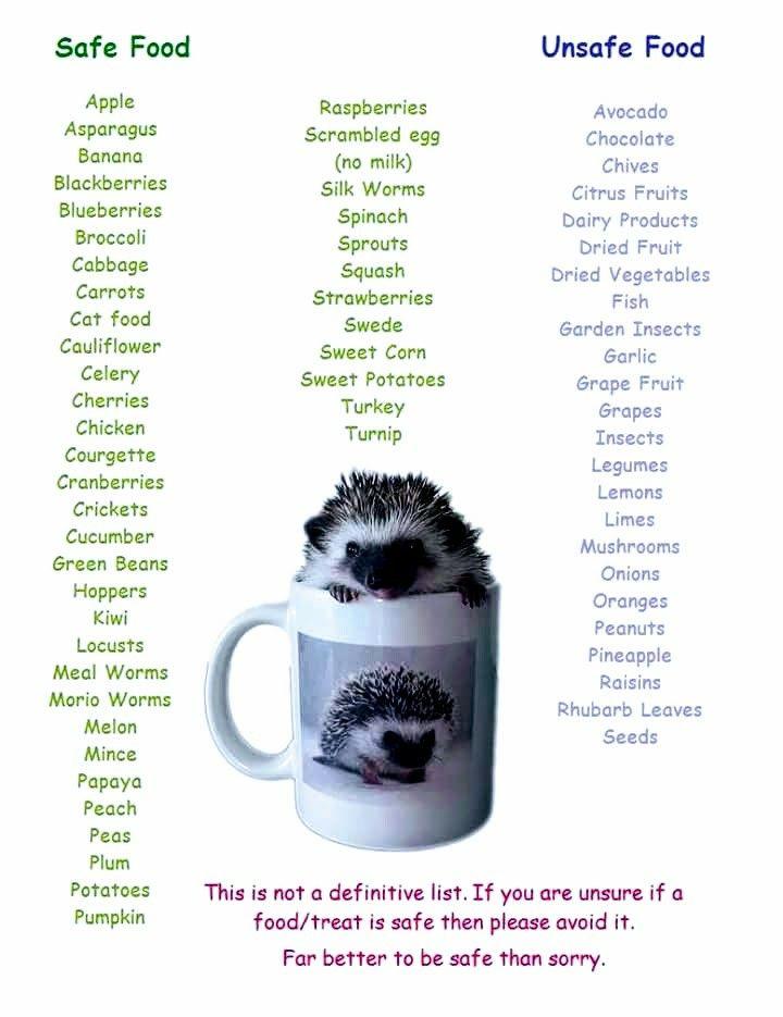 """""""Hedgehog Safe and Unsafe Food List!"""""""