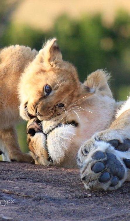 Animals Tumblr Animals Animali Animales Animales