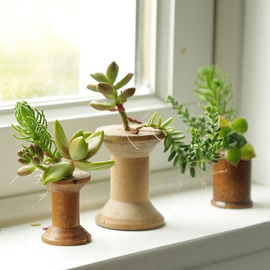 The types of threads housed in these repurposed spools are anything but synthetic! Follow this maker's lead by slipping the roots of your favorite succulent variety -- plus a bit of soil -- down into the spool's hole. Use a toothpick to help make room for the succulent's stem if needed./
