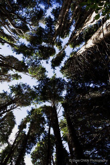 Trees at Zealandia - Karori Wildlife Sanctuary   © Elyse Childs Photography