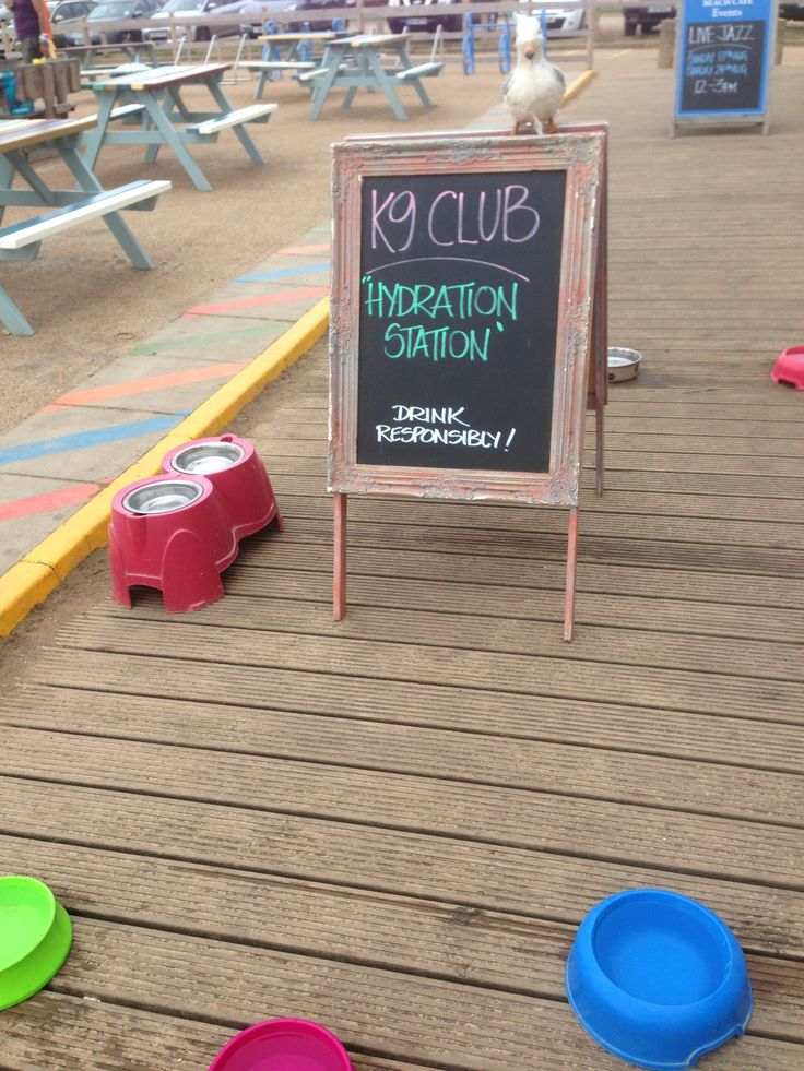 Dogs are important to us ! Look after them at The Beach Cafe