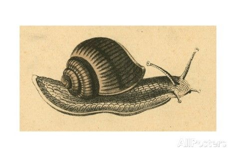 Snail - Gicleetryck av English School på AllPosters.se