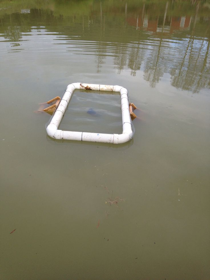 25 best ideas about turtle traps on pinterest turtle for Homemade fish traps