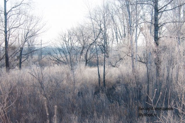 Снежно-изморозное настроение этого ясного и солнечного ноября в дальневосточной природе